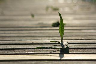 Considerazioni per essere meno bisognoso e più forte